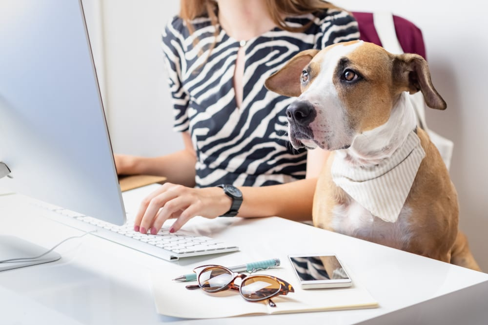 Use employee appreciation ideas like bring-your-pets day to recognize your staff.